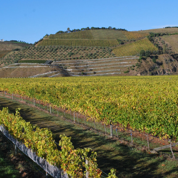 Sacred Hill Wines