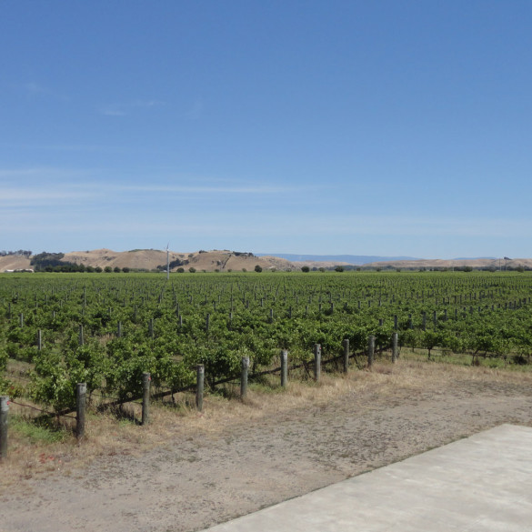 William Murdoch Wines